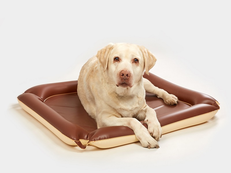 Inflatable mat for dogs
